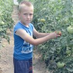 A child picking tomatoes from a greenhouse which is one of the Financing better lives project
