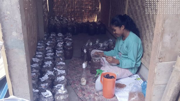 a woman cultivating mushroom as a project of livelihoods for women